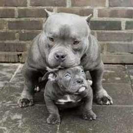Adopto cachorros
