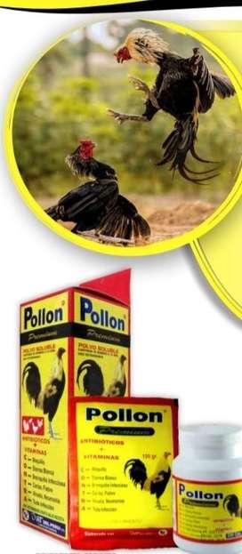 Pollon premium