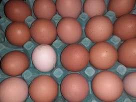 Venta de huevos de corral