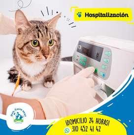 Hospitalización gatos y perros
