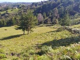 247 - GANGAZO... Lote para construcción casa finca, finca o subdivisión,  en venta - San Vicente, Antioquia