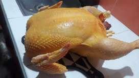 Vendo pollos gordos campesino de 8 libras en adelante en pie a dosmil kinientos pesos la libra