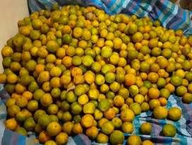 Mandarinas y naranjas al por mayor