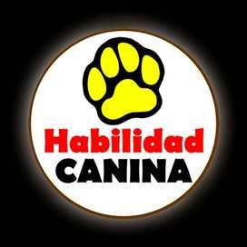 Entrenador Canino para todas las razas
