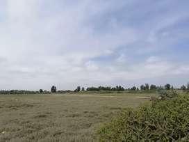 Vendo Excelente Terreno de 47.915 M2 Muy Cerca al Nuevo Aeropuerto de Pisco