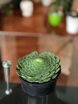 Hermosas plantas