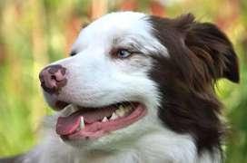 Profilaxis dental  veterinaria a domicilio