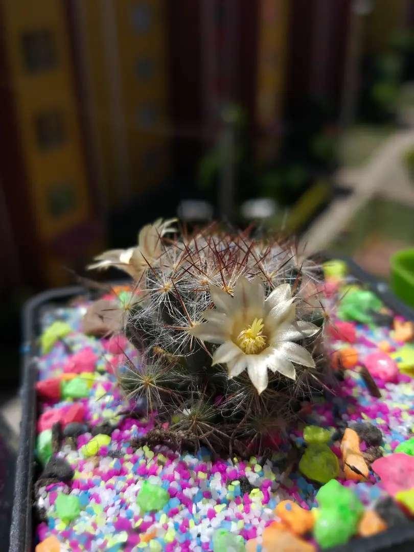 Cactus y suculentas 0