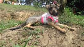 En adopcion perro: saltarina (criolla)