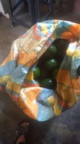 Vendo o permuto finca por negocio, con 2 casas, cultivos de café, cacao, mango tomy, cítricos, etc... Motivo salud