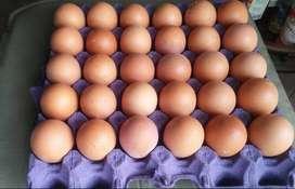 Maples de huevos
