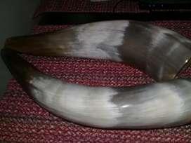 Cuernos Vikingos de 34 Cm