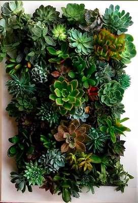 Cuadros vivos y jardines verticales con suculentas