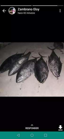 Venta de pescado bonito atún y albacora
