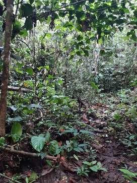 Se vende tres hectáreas de terreno en orellana