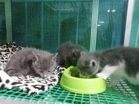 Para adopción gatos bebes esterilizados