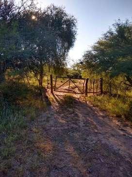 Vendo campo en Santiago Estero