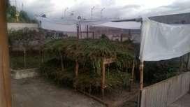 se vende cargas de alfalfa y pacas de heno de alfalfa