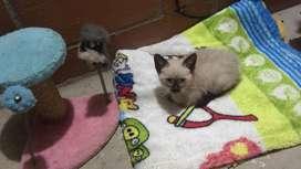 Gato adopcion