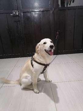Se da en adopción hermosa cachorra