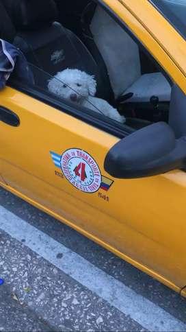 Vendo taxi con sistema de gas 2012