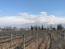 Venta de Bodega  Viñedo  Amplia Casa en Perdriel, a minutos del centro de Mendoza