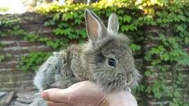 Hermosos Conejos peludos