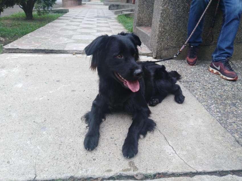 Hermoso Negrito en Adopcion Medellin 0