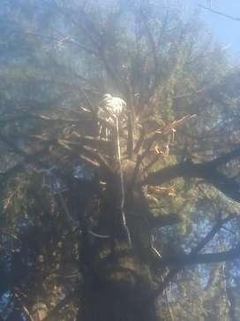 poda de árboles .limpieza de terrenos