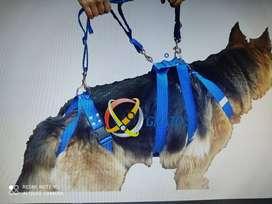 Arnés rehabilitación o fisioterapia para perros.