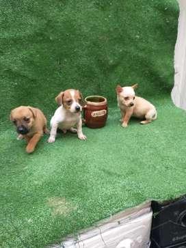 Cachorros en adopción