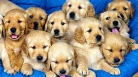 Guarderia Canina en Moron para razas pequeñas