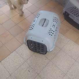 Transportador de perro