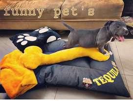 Cómodas camas para mascotas