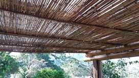 Bambú Cañabrava para Pergolas Cielorazos