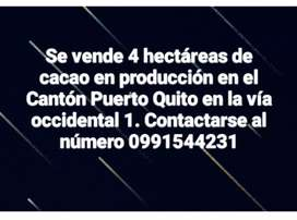 Vendo 4 Hectáreas de Cacao en producción