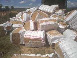 Vendo Casacarilla prensada y a granel a nivel nacional