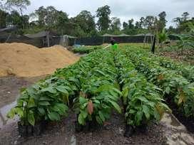 Necesito trabajador con experiencia en el campo en diferentes cultivos para vivir con familia
