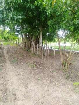Vendo lote Finca La Isla Mahates Bolívar Playones 9 millone la hectari