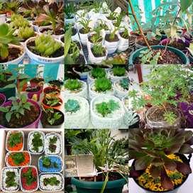 Plantas interior/exterior