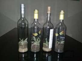 Terrario en botella