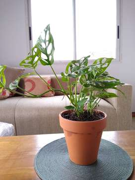Plantas de interior decorativas vivero online