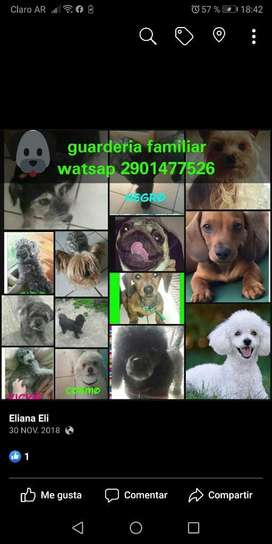 Guarderia Canina Familiar