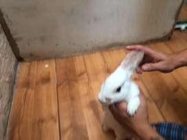 Doy en adopcion conejo