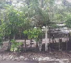 """Venta de terreno  en Orellana """"joya de los sachas"""