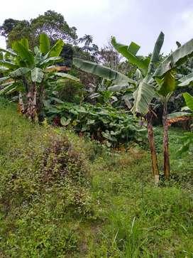 Vendo finca productiva en San Bernardo cindinamarca