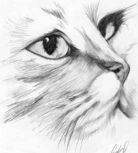 Aprende A Dibujar Desde Cero