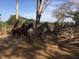 Potros potrancas caballos
