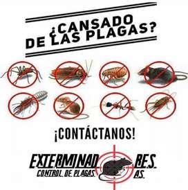 fumigaciones contra insectos