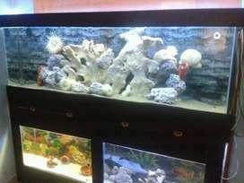 Corales blanqueados